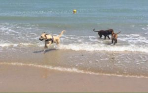 spiaggia per cani pescara