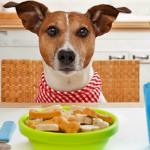 Linea di prodotti vegan per cani
