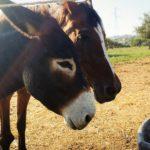 Oasi verde Mearas: fattoria vegana e santuario animale